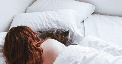 ¿Es bueno dormir con gatos en la cama por la nochhe